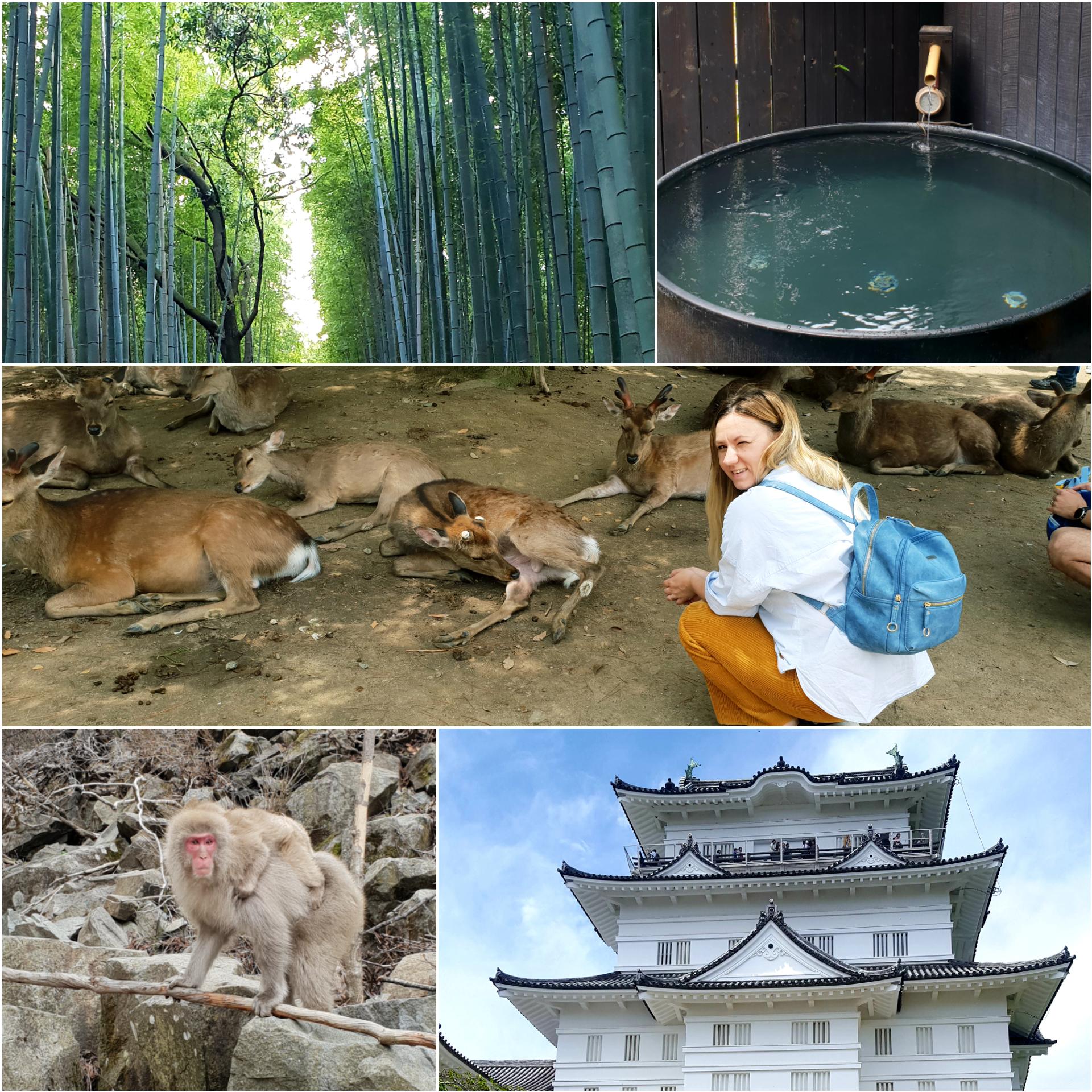Cinci locuri de vizitat în afara orașului Tokyo